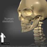 3ds max human skeletal