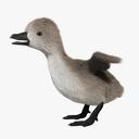 duckling 3D models