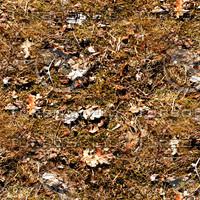 Leafy ground 11