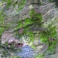 Mossy rock 13