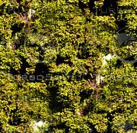 Mossy tree bark 13
