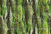 Mossy tree bark 12