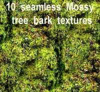 Mossy Tree Bark Collection 1