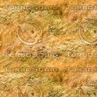 Dry tall grass 1
