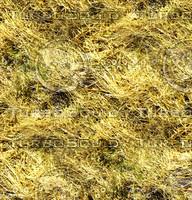 Dry grass 1