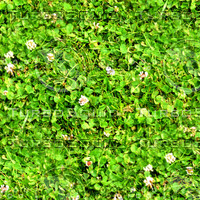 Grass with clover 12