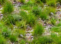 Rocky ground with grass patches 1