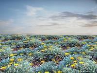 Flowering ground 1