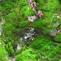 Mossy rock 20