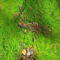 Mossy rock 16