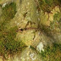 Mossy rock 17
