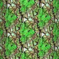 Mossy tree bark 19