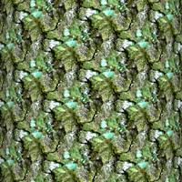Mossy tree bark 17
