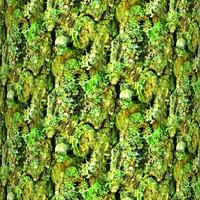 Mossy tree bark 18