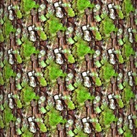 Mossy tree bark 16