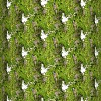 Mossy tree bark 15