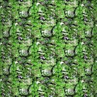 Mossy tree bark 20
