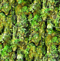 Mossy tree bark 18