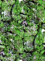 Mossy tree bark 20