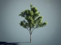 3d tree 01
