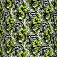 Mossy tree bark 22
