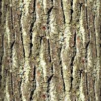 Tree bark 40