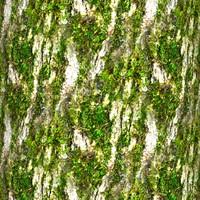 Mossy tree bark 23