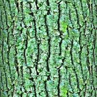Mossy tree bark 21