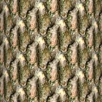 Tree bark 38