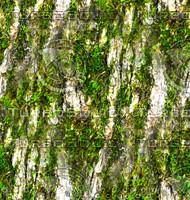 Mossy tree bark 23