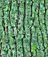 Mossy tree bark 21