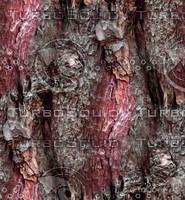 Tree bark 39