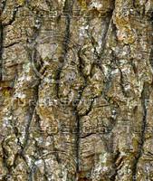 Tree bark 37