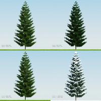 3d season tree pine002 model