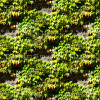 Stone wall with vines 5
