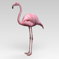 3d model flamingo