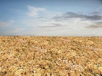 Dry ground 1