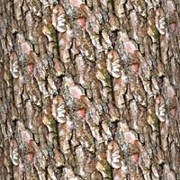Tree bark 41
