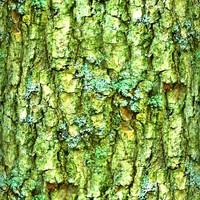 Mossy tree bark 24