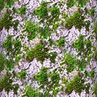 Mossy tree bark 26