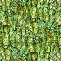 Mossy tree bark 24