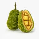 Jackfruit 3D models