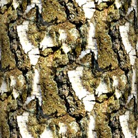 Tree bark 44