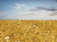 Beach foam 17