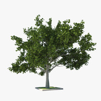 3d model of wood tree