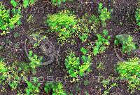 Groundplants 1