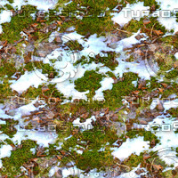 Snow on leafy ground 1