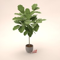 3d potted tree oak