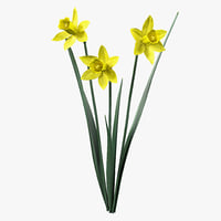 daffodil flowers 3ds