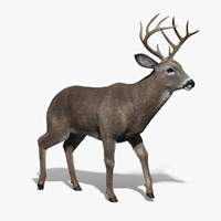 white tailed deer fur 3d obj